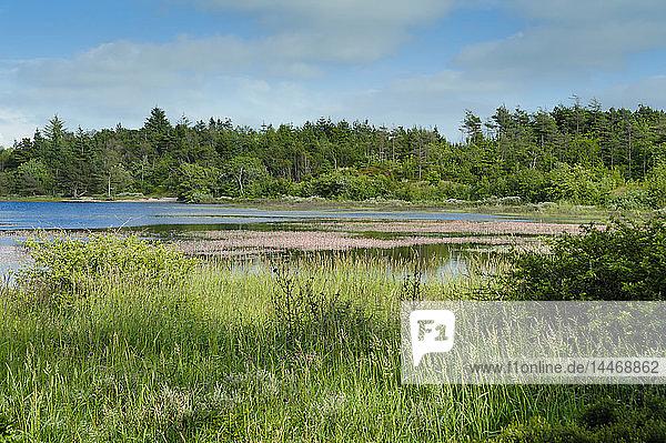 Dänemark  Jütland  Dein Nationalpark