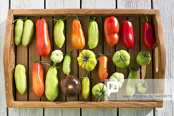 Schale mit verschiedenen Tomaten  Reifestadium  unreif