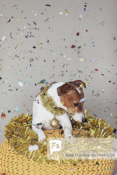 Hund mit goldener Girlande und Weihnachtskugel