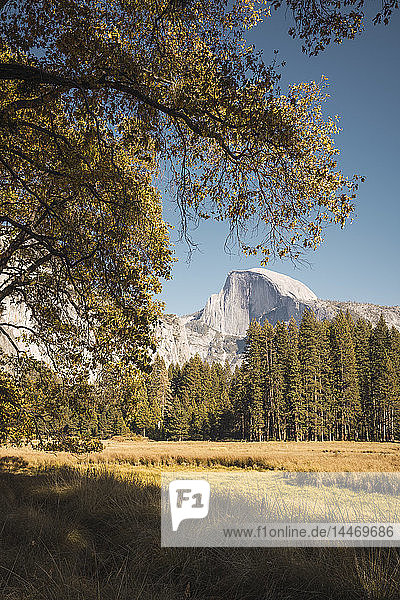 USA  California  Yosemite National Park  landscape with El Capitan in background