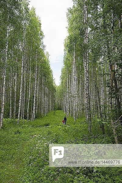 Finnland  Kuopio  Mutter und Tochter spazieren in einem Birkenwald
