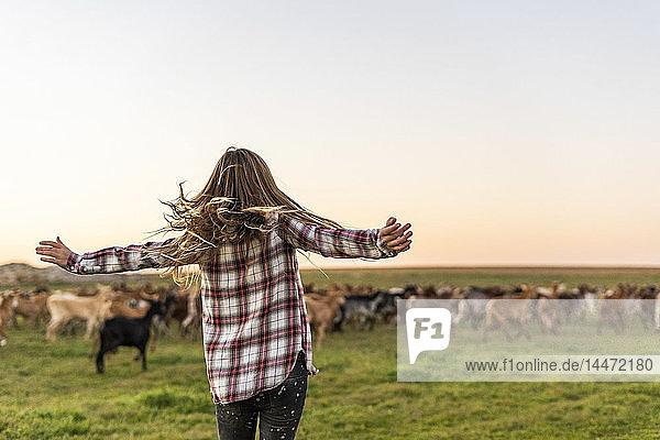 Rückenansicht eines Mädchens  das eine Ziegenherde hütet