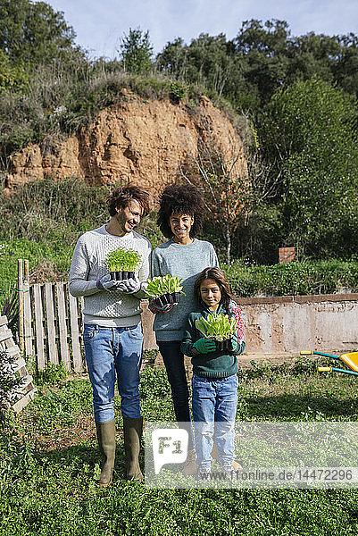 Glückliche Familie mit Salatsetzlingen in einem Gemüsegarten