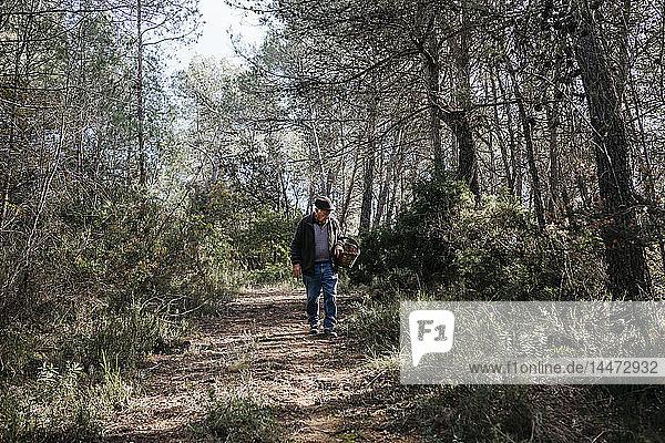 Älterer Mann sucht im Wald nach Pilzen