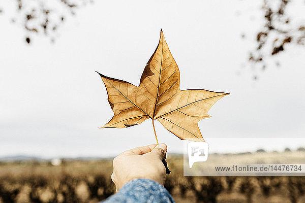 Hand mit einem braunen Herbstblatt