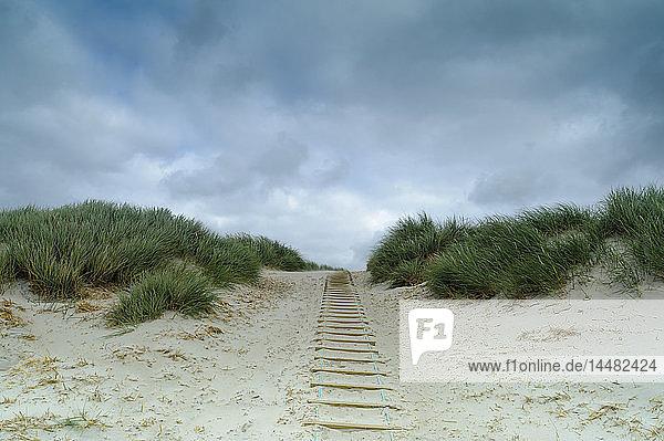 Dänemark  Jütland  Henne Strand  Dünenlandschaft