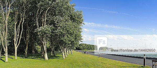 Dänemark  Jütland  Sonderborg  Bäume in einem Park an der Küste