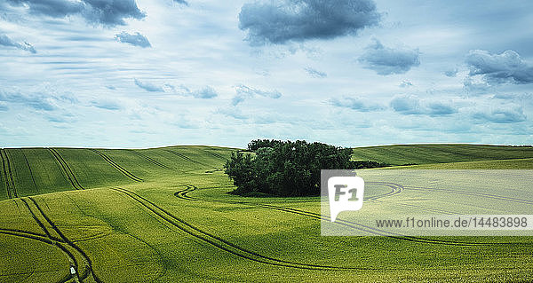 Scenic view green farmland and stand of trees  Brandenburg  Germany