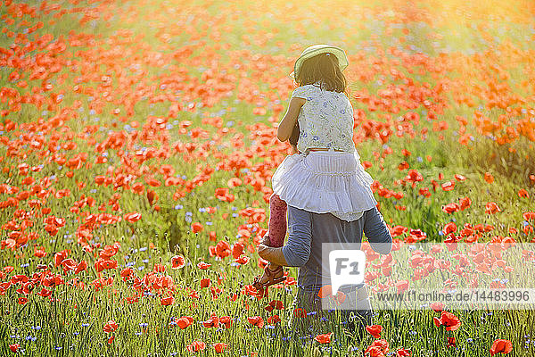 Father carrying daughter on shoulders in sunny  idyllic rural field with red poppy flowers