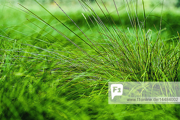 Close up vibrant green grass