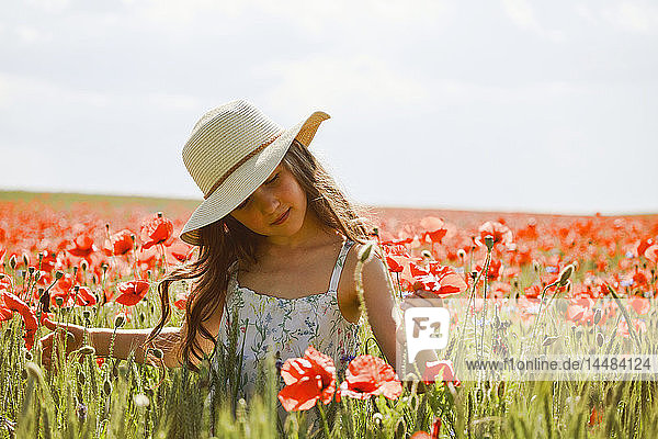 Serene girl picking red poppies in sunny  idyllic rural field