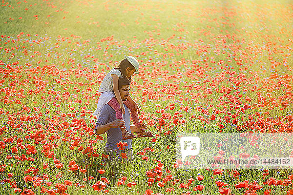 Father carrying daughter on shoulders in sunny idyllic rural field with red poppies