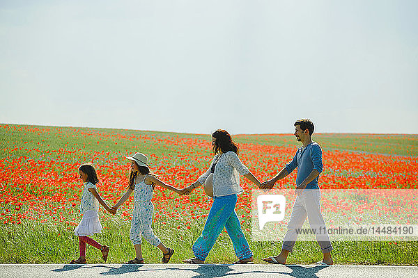 Pregnant family holding hands  walking along sunny  rural red poppy field