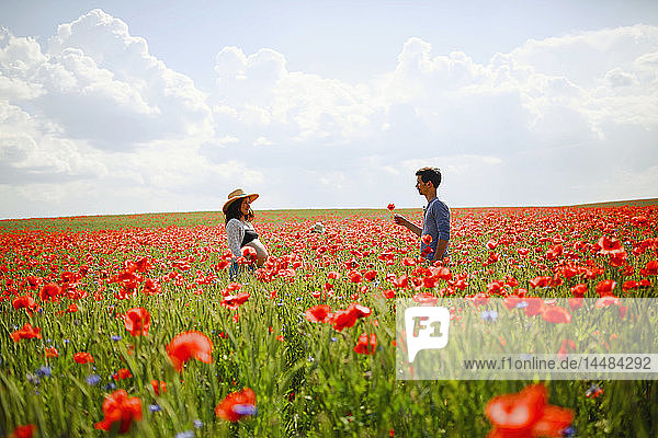 Pregnant couple in sunny  idyllic red poppy field