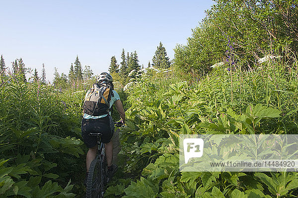 Woman mountain biking through a tall patch of cow parsnip on the Resurrection Pass trail  near the town of Hope  Kenai Peninsula Alaska  Summer