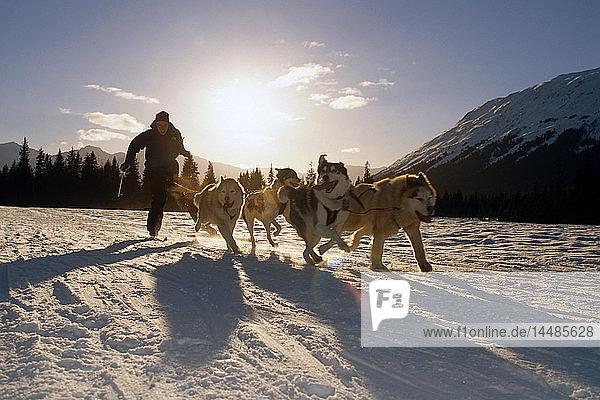 Ski-jouring Winter @ Girdwood Southcentral AK