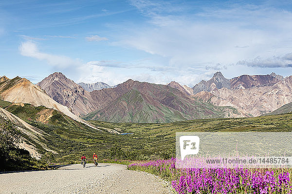 Bicyclists ascend to the summit of Sable Pass in Denali National Park in Interior Alaska  Summer.