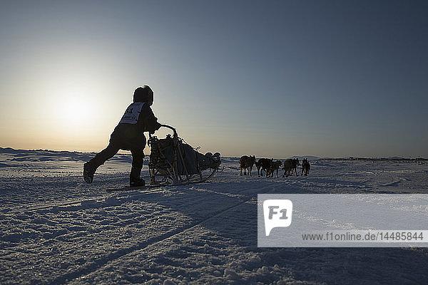 Jessica Hendricks runs on the Bering Sea several miles before the finish line in Nome   2013 Iditarod  Arctic Alaska
