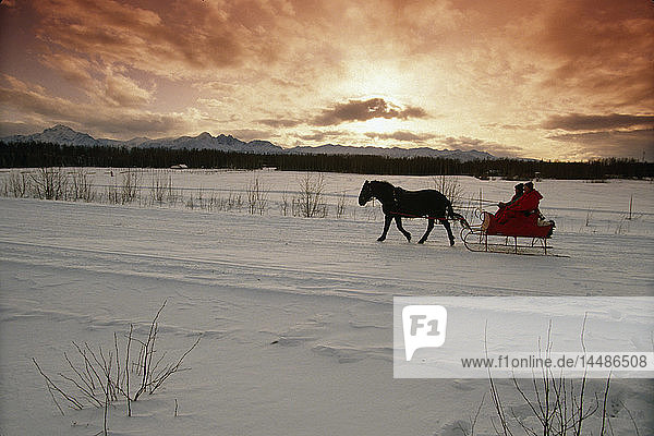 Horse Drawn Sleigh in Chugach Mtns SC AK Winter Mat-Su Valley
