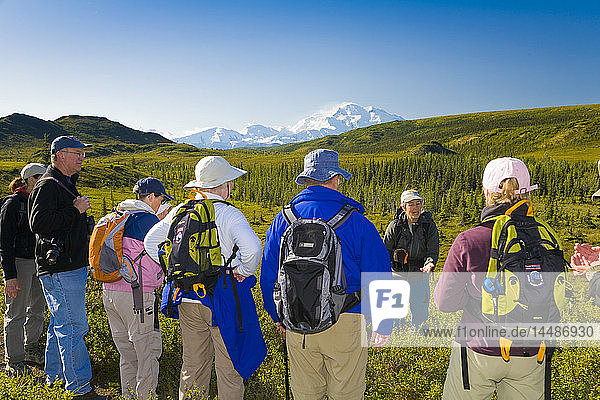 Group of hikers take in the view of the northside of Mt. Mckinley  Denali National Park  Interior Alaska  Summer/n