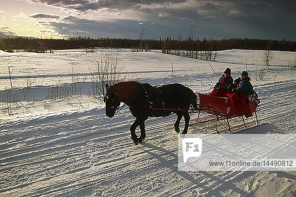 Horse Drawn Sleigh in Chugach Mtns SC AK Winter Mat-Su Valley