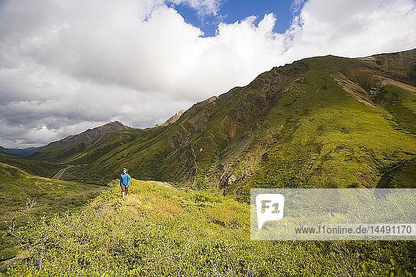 Female hiking on a ridge near Sable Pass in Denali National Park  Interior Alaska  Summer/n