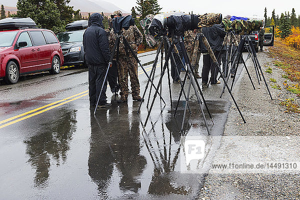 Many photographers with tripods stand in rainy weather photographer along the roadside in Denali National Park  Interior Alaska