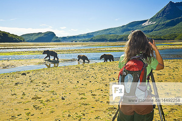 Female photographer photographs a Grizzly sow & cubs in Geographic Harbor in Katmai National Park  Alaska