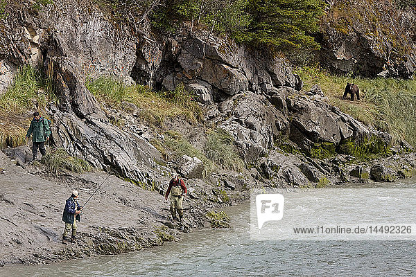 Three fisherman leave the shores of Bird Creek as a Brown bear approaches along the shoreline  Southcentral Alaska