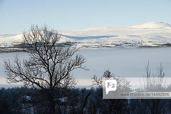 View of winter landscape