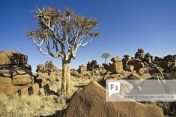 Tree among rocks in desert
