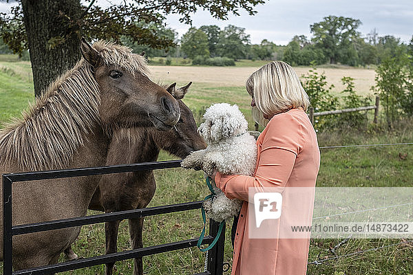 Woman with dog looking at horses