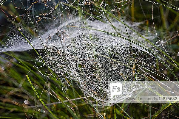 Spider web on grass