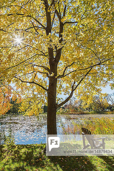 Wooden Adirondack chair on lawn beneath Maple tree  Montreal Botanical Garden  Quebec  Canada