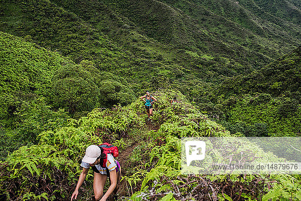 Wanderer  die im Regenwald wandern  Moanalua Valley Trail  Oahu  Hawaii