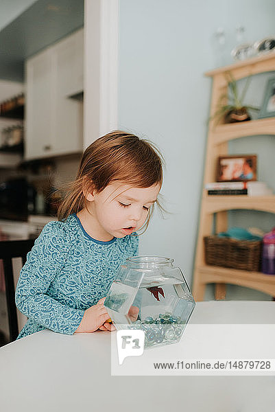 Female toddler peering at goldfish bowl on table