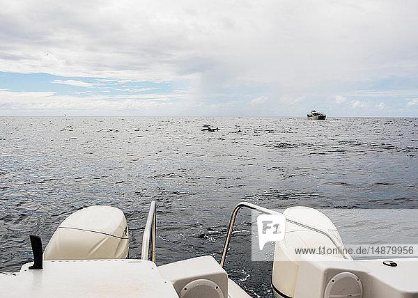 Motorboot auf See  Küste von Na Pali  Kauai  Hawaii