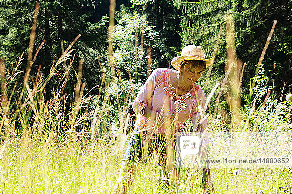 Woman picking wild flowers in forest  Sonthofen  Bayern  Germany