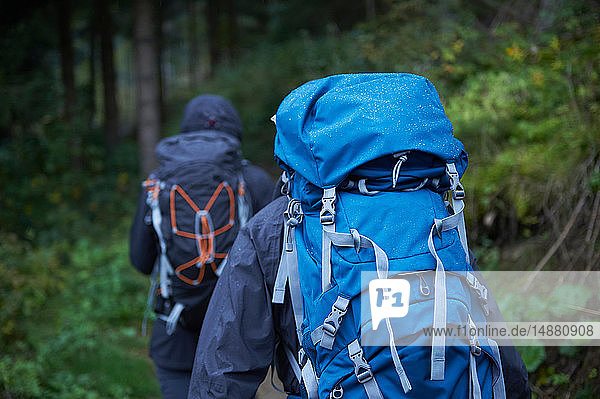 Junges Wanderpaar wandert mit Rucksäcken durch den Wald  Rückansicht  Manigod  Rhône-Alpes  Frankreich