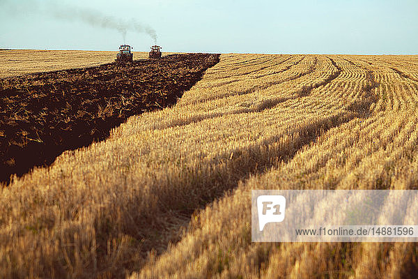 Field landscape of harvested wheat field being ploughed by tractors