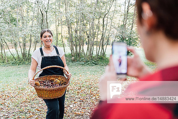 Women taking photo of chestnut collecting  Rezzago  Lombardy  Italy