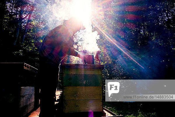 Beekeeper smoking beehive in farm  Ural  Bashkortostan  Russia