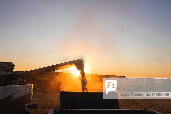 Harvester operating on farm at sunrise
