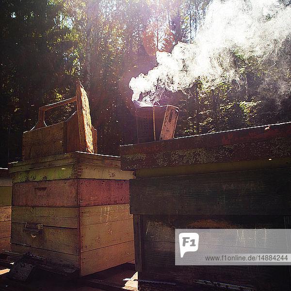 Bee smoker on beehive in farm  Ural  Bashkortostan  Russia