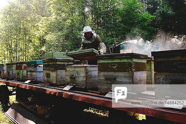 Imker im Bienenstockbetrieb  Ural  Baschkortostan  Russland