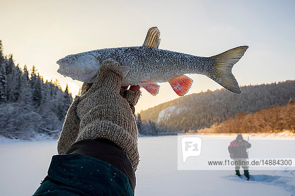 Landscape fishing on snow covered frozen lake  hand holding up caught fish  close up