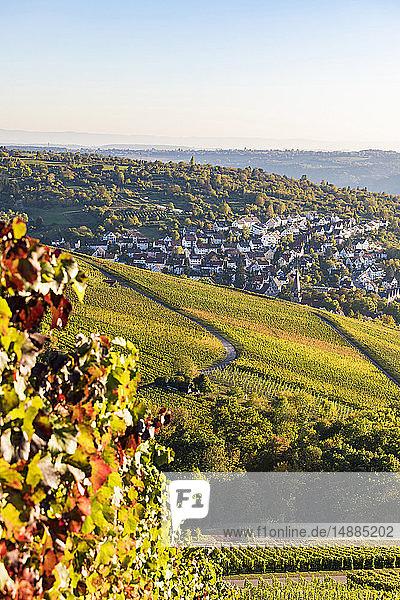 Germany  Baden-Wuerttemberg  Stuttgart  view over grapevines to Uhlbach