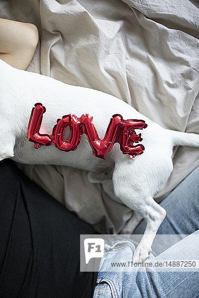 Frau und Hund im Bett mit Liebesfolienballon