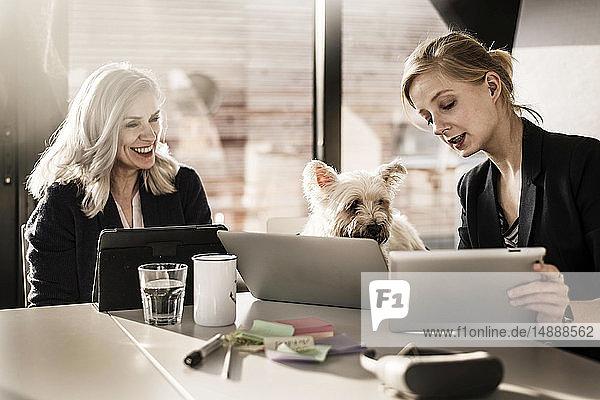 Kollegen sitzen am Schreibtisch  arbeiten  kleiner Hund schaut zu