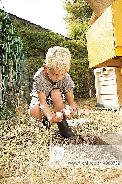 Junge sammelt Eier im Hühnerstall im Garten